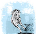 Sketch of white horse running Stock Photos