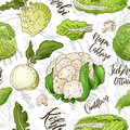Sketched vegetables background. Vector seamless pattern with kohlrabi and napa cabbage and couliflower and lettuce. Hand
