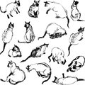 Sketches cat the vector image of a sketch of a in various poses Royalty Free Stock Photography