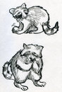 Sketches of raccoons hand drawn pencil eating Royalty Free Stock Image