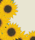 Sketchy sunflowers card background greeting with copy space Royalty Free Stock Photo
