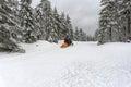 Ski patrol evacuate an injured skier jakuszyce poland february Stock Images