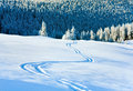 Ski trace on snow surface  and fir forest behind. Stock Image