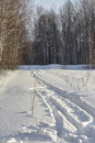 Ski track in snow. sunny day, birch forest, deep white snow. Royalty Free Stock Photo