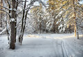 Ski trail in the winter cold woods landscape Royalty Free Stock Images