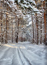 Ski trail in the winter pine forest landscape Royalty Free Stock Photography
