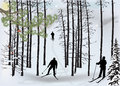 Skiers silhouette in snow winter forest