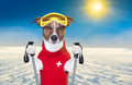 Skiing dog Royalty Free Stock Photo