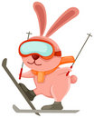 Skiing rabbit Stock Images