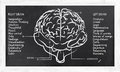 Skills right left hemisphere blackboard Royalty Free Stock Photo