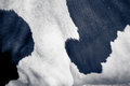 Skin and fur of cow Royalty Free Stock Photo