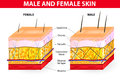 Skin male and female men tend to have more connective tissue that are arranged in such a way that it gives better support to the Royalty Free Stock Photos