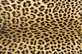 Skin's texture of leopard Stock Photos