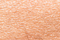 Skin texture macro closeup white clean with extreme detail Royalty Free Stock Photography