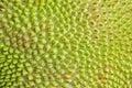 Skin texture of tropical fruit Jackfruit