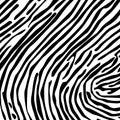 Skin of a zebra Royalty Free Stock Photo