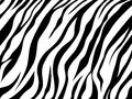Skin zebra vector abstract texture Stock Photos