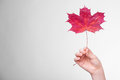 Skincare. Hand with maple leaf as symbol red dry capillary skin. Royalty Free Stock Photo