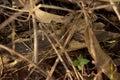 Skink small twigs secretly slipped beneath the ground Royalty Free Stock Photo