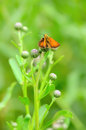 Skipper butterfly on a stalk of plant Royalty Free Stock Photography