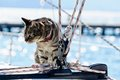 Skipper cat with sailing yacht rigging Stock Photography