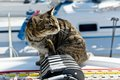 Skipper cat with sailing yacht rigging Royalty Free Stock Image