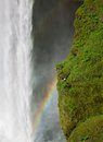 Skogafoss waterfall and seagull nest view of rainbow on the south of iceland near the town skogar Stock Image