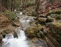 Skogen strömmer Arkivfoto