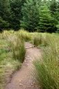 Skogwalkway Fotografering för Bildbyråer