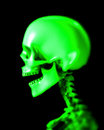 Skull 48 Royalty Free Stock Images