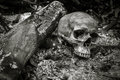 Skull on ashes Royalty Free Stock Photo