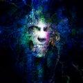 Skull Design Royalty Free Stock Photo