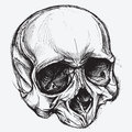 Skull drawing vector for use Royalty Free Stock Photos