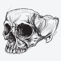 Skull drawing vector for use Royalty Free Stock Images