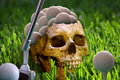 Skull and golf balls Stock Photography