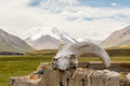 Skull gornoshl sheep mountains in the background kyrgyzstan tien shan Stock Photo