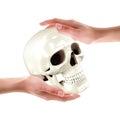 Skull in hands high resolution d render Stock Image