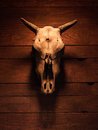 Skull With Horns Of An Artioda...