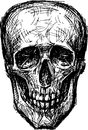 Skull of a human vector sketch Royalty Free Stock Images