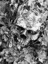 Skull in leaves Royalty Free Stock Photography