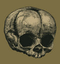 Skull in the style of engravings Royalty Free Stock Photo