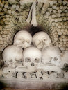 Skulls and bones Royalty Free Stock Photo
