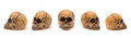 Skulls from five perspectives Stock Photo
