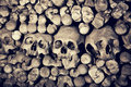 Skulls a lot of real Royalty Free Stock Image