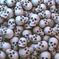 Skulls natural Royalty Free Stock Photo