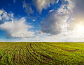 Sky above field landscape cloudy with unripe wheal countryside Stock Photos