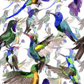 Sky bird colibri in a wildlife by watercolor style pattern.