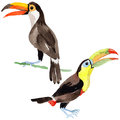 Sky bird toucan in a wildlife by watercolor style isolated.
