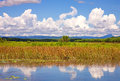 Sky on fields and swamps n summer Royalty Free Stock Photo