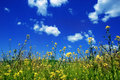 Sky with flowers Royalty Free Stock Photo